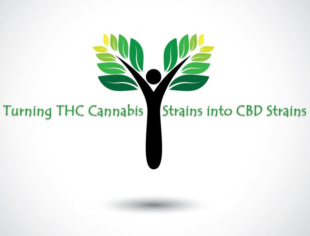thc strains to cbd strains