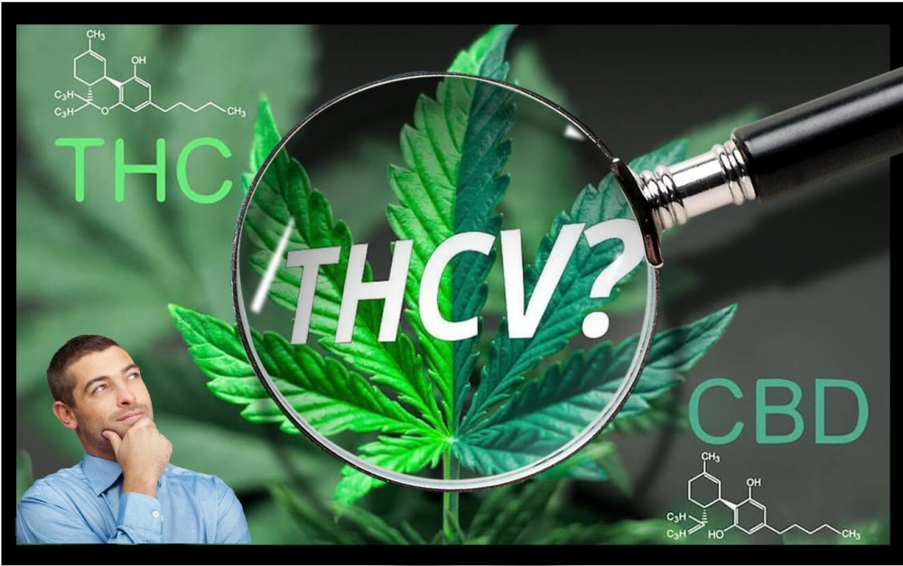 THCV EXPLAINED FROM THC