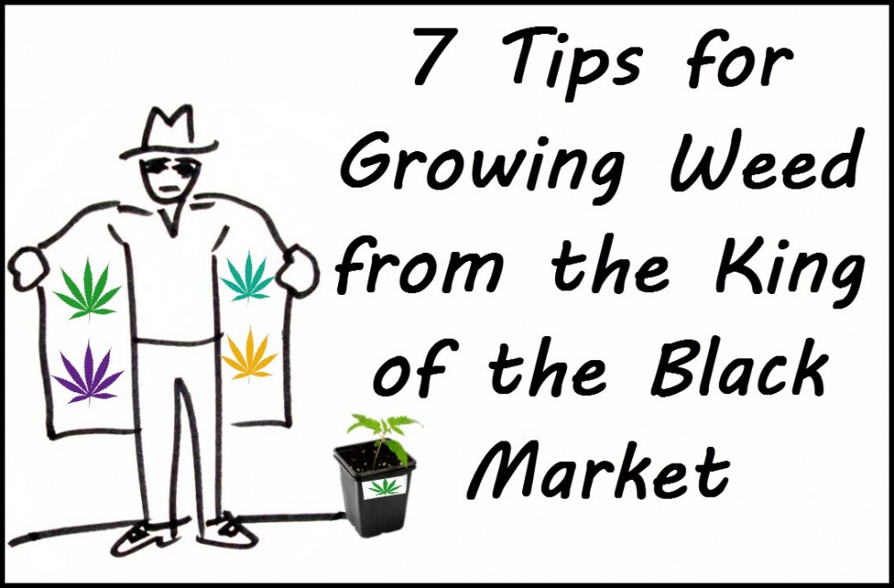 CANNABIS GROWING TIPS AND TRICKS