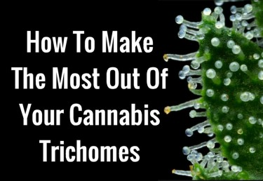 the key to trichome growth