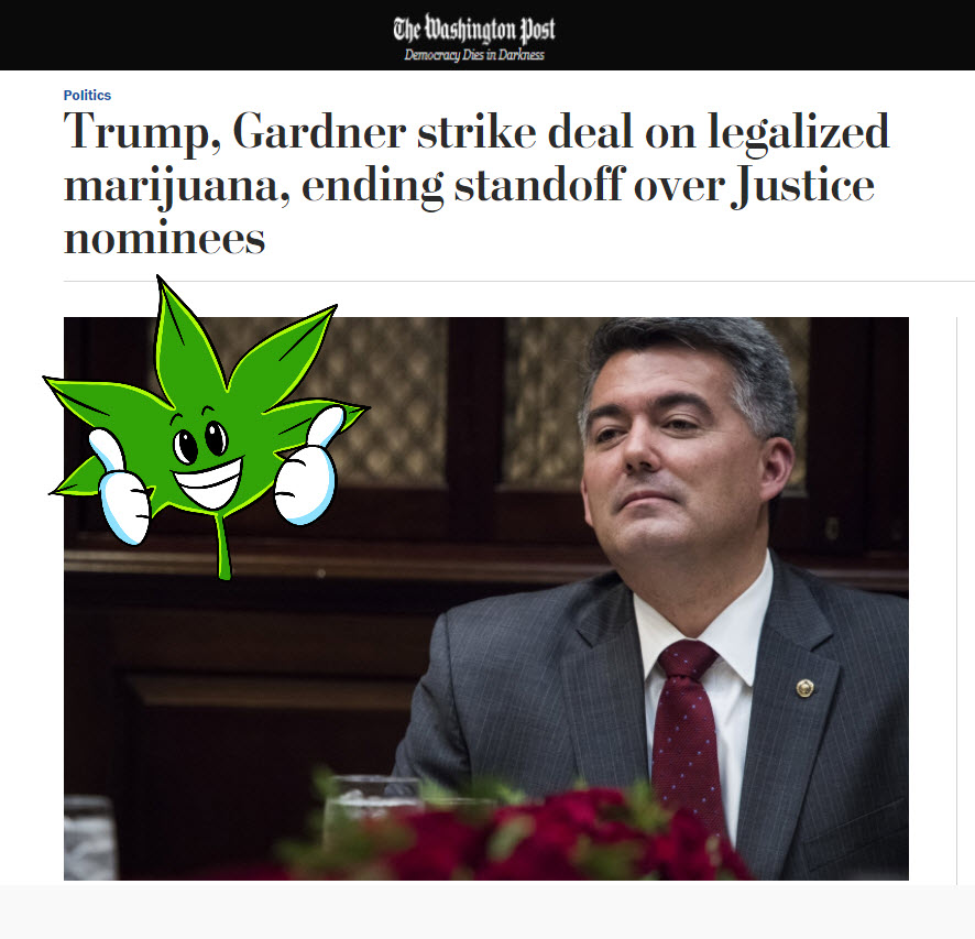 trump to legalize cannabis