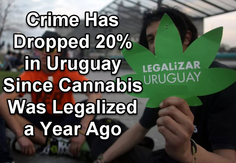CRIME DROP IN URUGUAY AFTER CANNABIS