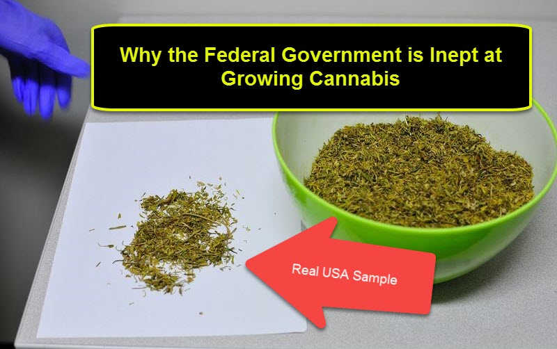 US FEDERAL GOVERNMENT GROWING MEDICAL MARIJUANA
