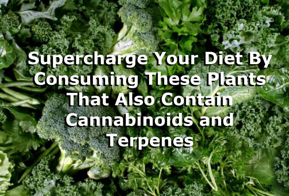 VEGGIES HIGH IN CANNABINOIDS