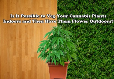 CAN YOU VEG YOUR CANNABIS PLANTS INDOORS AND THEN GO OUTDOORS