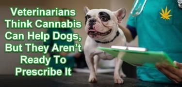 VETS PRESCRIBE MARIJUANA FOR DOGS