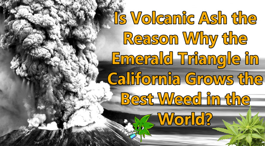 volcanic ash and california weed
