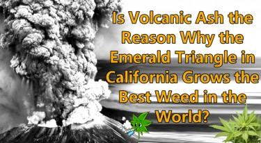 VOLCANIC ASH TO GROW WEED