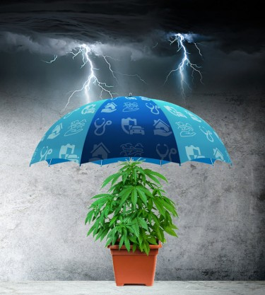 weed insurance