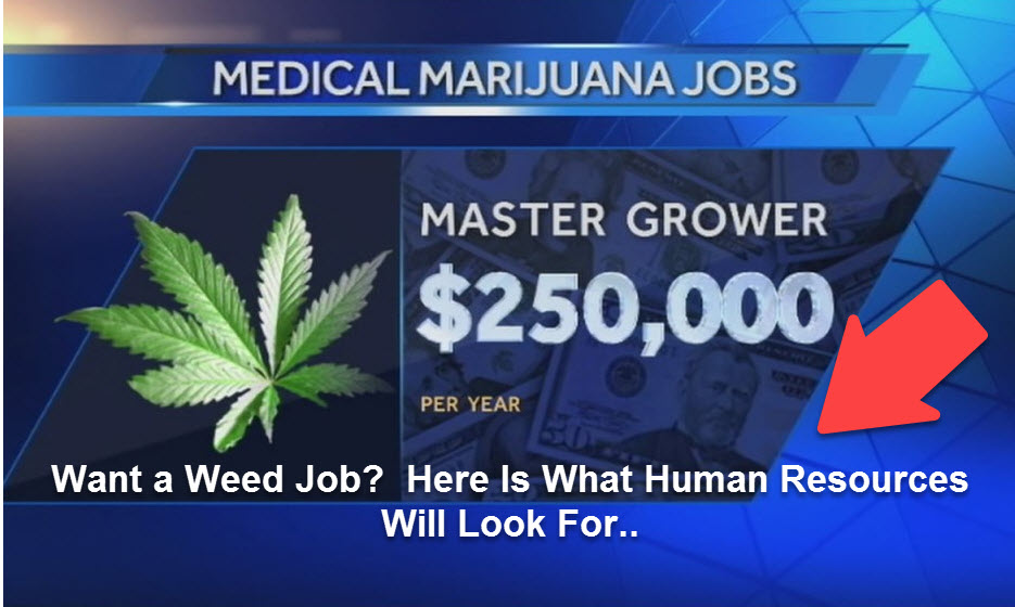 CANNABIS JOB INTERVIEW