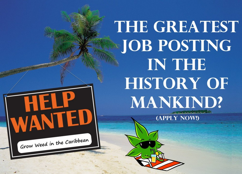 weed jobs in the caribbean