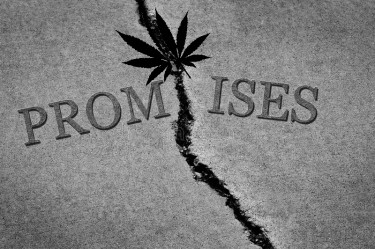 cannabis weed promises