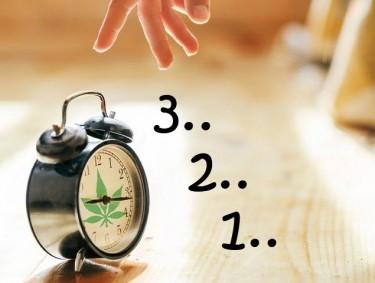 how to take a marijuana tolerance break