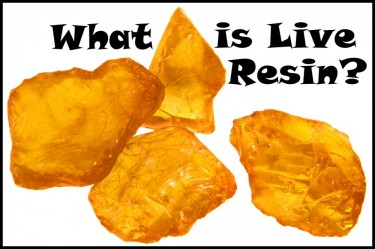 WHAT IS LIVE RESIN
