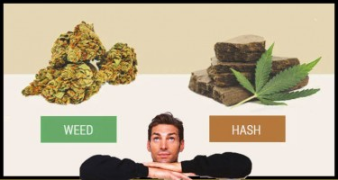 WHAT IS THE DIFFERENCE BETWEEN MARIJUANA AND HASH