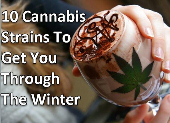 winter cannabis strains