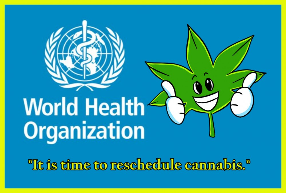 world health organization on cannabis