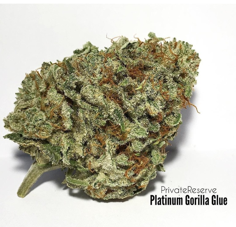 Gorilla cannabis seeds coupon code